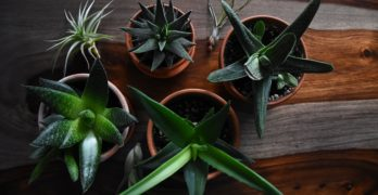 The Best Shower Plants for a Happier, Healthier Bathroom