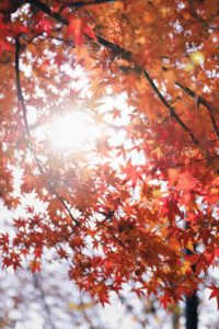 Fall Home Improvement Projects That Will Save You Money